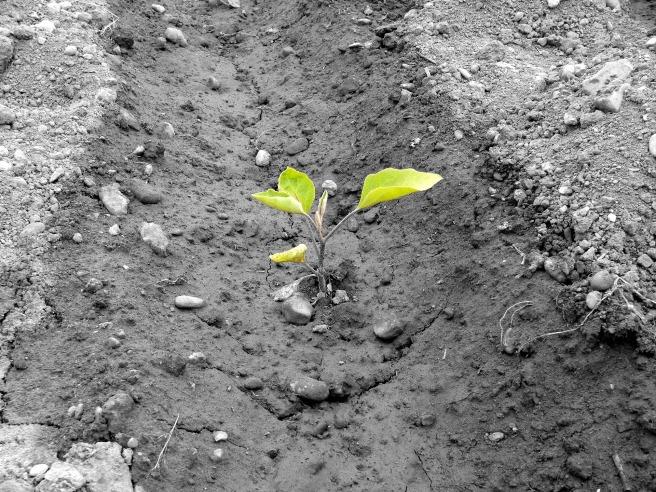 plant-913348_1920